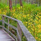 View the Wild Sunflowers by Rosalie Scanlon