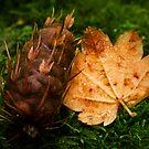 Maple and Douglas Fir by failingjune