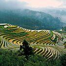Rice Terraces(Banaue,Phil.) by saseoche