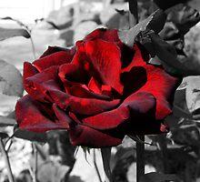 Bleeding Rose by Tara Johnson