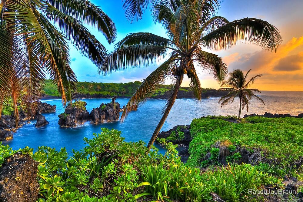 Where Coconuts Grow by Randy Jay Braun
