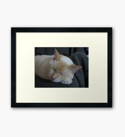 Sleeping bubba Framed Print