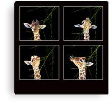 Baby Giraffe Composite Canvas Print