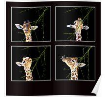 Baby Giraffe Composite Poster