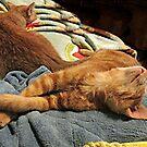 Stretching As He Sleeps by Jane Neill-Hancock