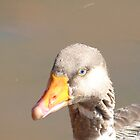 Domestic goose by Shaun Swanepoel