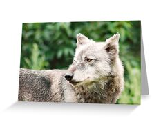 Canadian Timber Wolf Greeting Card