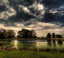 pond by Matthew Jones