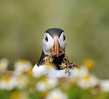 Puffin chores by Jacky Parker