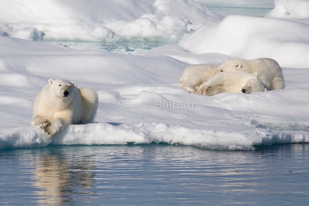Respite On Ice by Steve Bulford