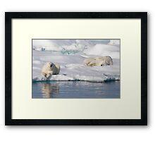 Respite On Ice Framed Print