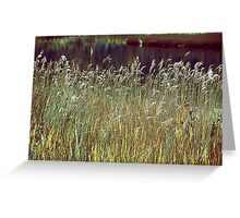 Grass Screen Greeting Card