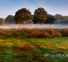 Fields of Mist by WillOakley