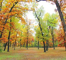 Trees of Autumn by Pahl