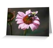 bee on pink echinacea Greeting Card