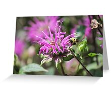 bee on flower in the garden Greeting Card