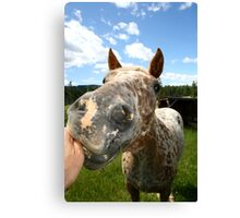 Have a Nibble.............. Canvas Print