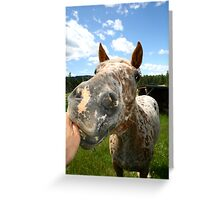 Have a Nibble.............. Greeting Card