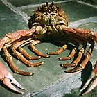 spider crab by opiumfire