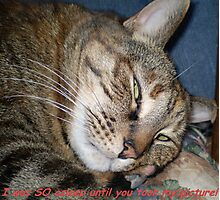 I was SO asleep until you took this picture! Photographic Print