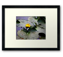 Rocky Mountain Lilly Pad Framed Print