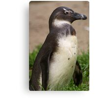 Cute Penguin Canvas Print