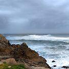 Monterey by Nikki Collier