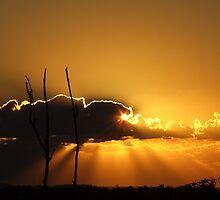 """""""Golden Dawn"""" by debsphotos"""