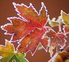 Frosted Fall Colors by ShutterbugCel