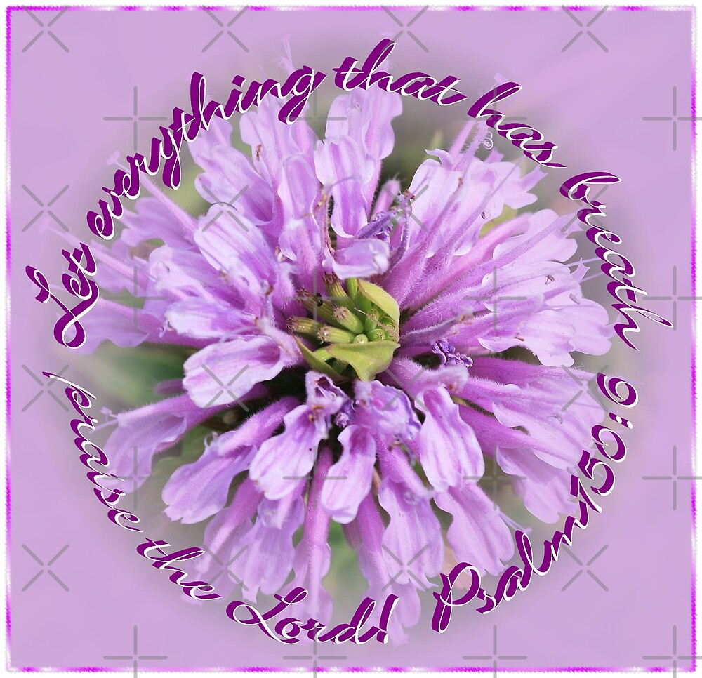 Psalm 150:6 by Julie's Camera Creations <><