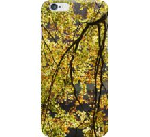 Backlit Leaves iPhone Case/Skin
