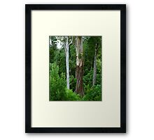 Mountain Ash, Otways. Framed Print