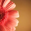 Simplicity :) by Honor Kyne