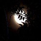 Harvest Moon by Glenna Walker