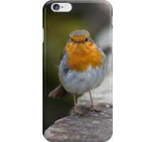 Robin on wall iPhone Case/Skin