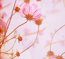 wild strawberries by Morgan Kendall