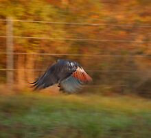 Red Tail Hawk - Motion Blur by KSkinner