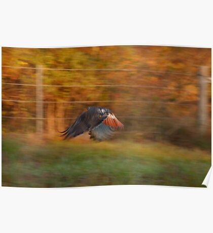 Red Tail Hawk - Motion Blur Poster