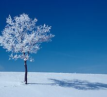 Frosted Tree by CalendaRus