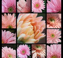 Pink Collage by Donna Adamski