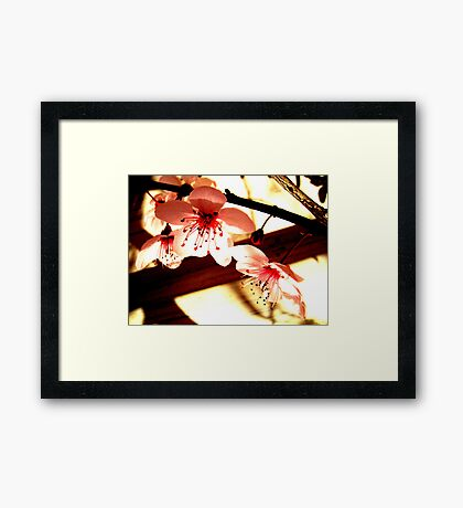 Blossoms and Shadows Framed Print