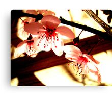 Blossoms and Shadows Canvas Print