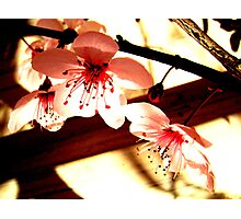 Blossoms and Shadows Photographic Print