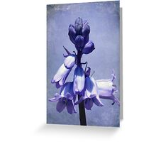 Bluebell with Texture Greeting Card