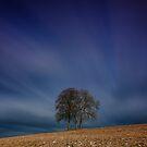 Tree's A Cloud by jakeof