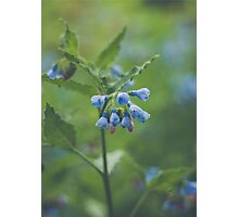 Tiny Blue Flowers Photographic Print