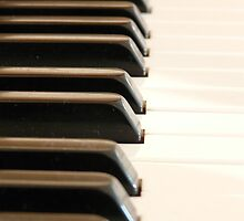 Piano keys by franceslewis