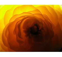 flashy flora Photographic Print