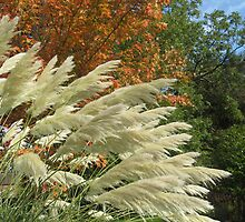 Pampas with Orange (Oct 2008) by fatchickengirl