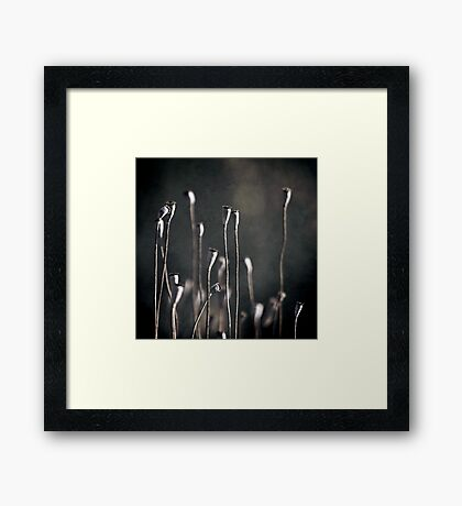 up to the sun Framed Print